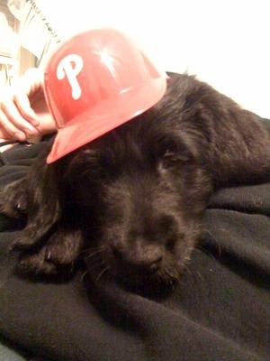 perrin.puppy.JPG